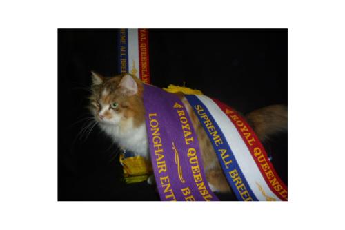 Jaromira Siberian Breeder Award