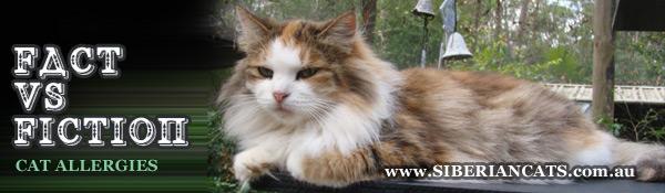 Siberian-Cat-Allergies