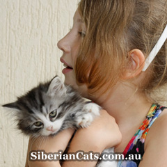 Siberian-Cat-with-kids