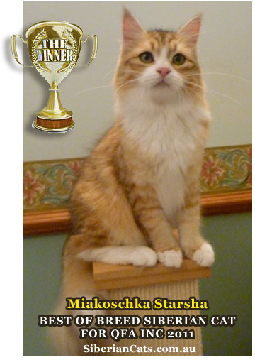 Best of Breed Siberian Cat for QFA Inc 201