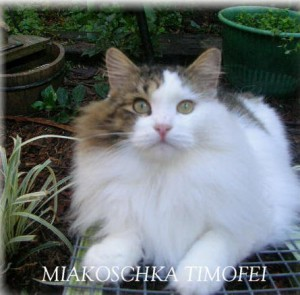 MiakoschkaTimofei