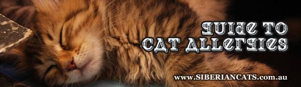 siberian-cat-allergy-guide