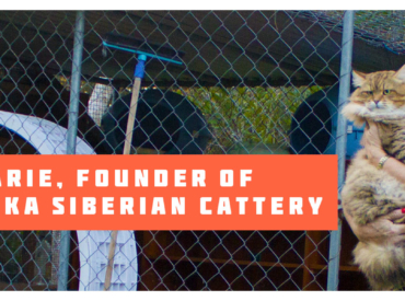 Our Brisbane Siberian Cattery – Gallery and Location