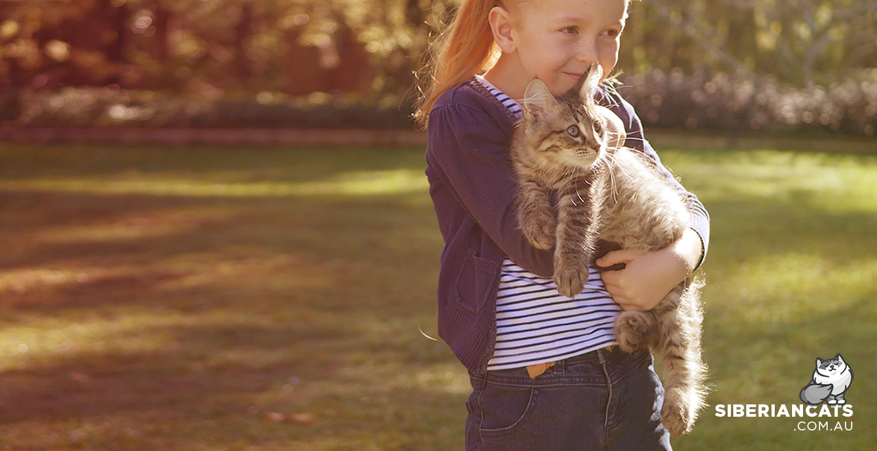 Siberian Cats Website